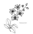 orchid flower and leaf hand drawn botanical vector image vector image