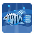 cute beautiful blue tropical fish on sea vector image vector image