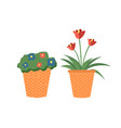 plants growing in pots potted flowers set vector image vector image