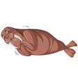 a walrus character on white background vector image