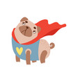 cute pug dog in superhero costume funny friendly vector image vector image