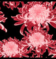 background with red japanese chrysanthemums vector image