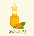 bottle with walnut or nut oil near groundnuts vector image vector image