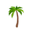 palm tree with bright green leaves plant of vector image vector image