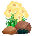 pretty flowers and rocks on white background vector image vector image