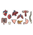 set of human internal organs for transplantation vector image vector image