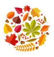 flat autumn leaves colorful fall park leaf maple vector image vector image