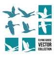 flying goose vector image vector image