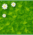 green backdrop with grass and camomiles vector image vector image