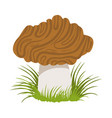 morel edible forest mushroom colorful cartoon vector image