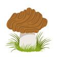 morel edible forest mushroom colorful cartoon vector image