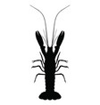 graphic lobster on white background vector image