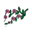 branch sakura with flowers cherry blossom vector image vector image