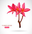 image of frangipani flower vector image