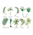 palm leaves set isolated on white colored vector image