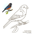 Scarlet bellied mountain tanager color book vector image vector image