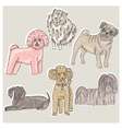 set cute little breed dogs vector image