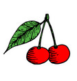 cherry with leaf colored sketch vector image