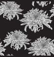 chrysanthemum flowers seamless pattern vector image