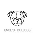 english bulldog linear face icon isolated outline vector image vector image