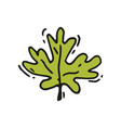icon of bright green leaf of maple or oak vector image