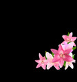 with pink lily isolated on vector image