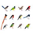 beautiful flying bird set vector image vector image