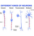 Different kinds of neurons vector image vector image