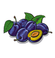fresh plums vector image vector image