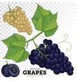 Grape Set vector image vector image