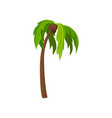 palm tree with ripe coconut fruits green leaves vector image vector image