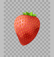 strawberry closeup on transparent in vector image
