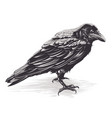 crow art on white vector image