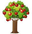 apple tree isolated on white background vector image