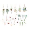 Domestic plants and hanging pots flat set