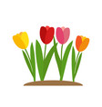 spring tulip flowers background vector image vector image
