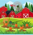 farm scene with carrot garden vector image