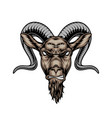 colorful angry horned goat head vector image vector image