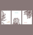 minimalistic trendy cards with protea vector image vector image