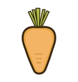 orange carrot vegetable vector image vector image