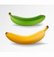 banana realistic yellow and green banana vector image vector image