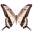 Isolated Light Butterfly vector image