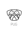 pug linear face icon isolated outline dog head vector image vector image
