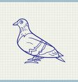 simple of a pigeon vector image