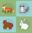 Wild animals collection