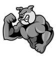 Bulldog Muscle vector image vector image