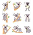 cute koala funny australia animals collection vector image vector image