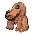 portrait of spaniel vector image vector image