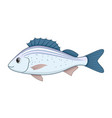 spotted grunter fish on a white background vector image