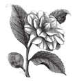 winter rose vintage engraving vector image vector image